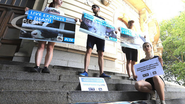 Протестиращи: Спрете жестокото транспортиране на живи животни