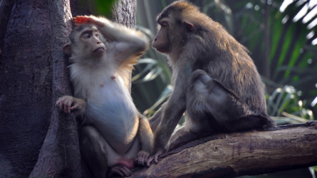 10 от най-умните животински видове
