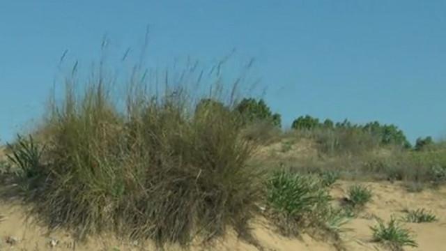Затвор и конфискация на АТВ-та при унищожаване на дюни