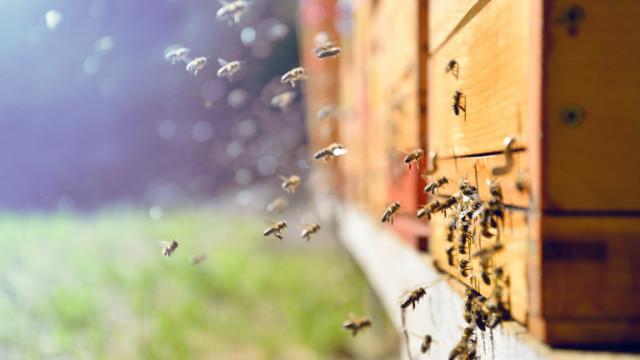Пожарите в Гърция унищожиха хиляди кошери, производството на мед е застрашено