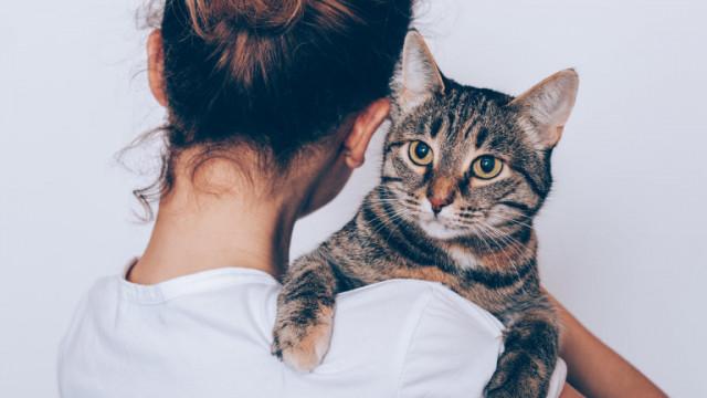 Колко ни харесват котките