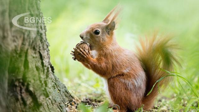 Орехите понижават нивата на холестерола