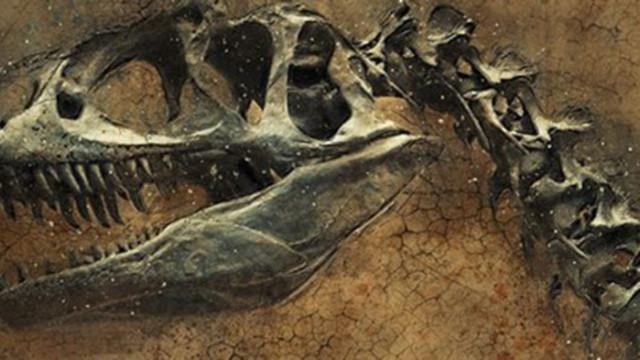 Палеонтолози идентифицираха неизвестен досега вид динозавър