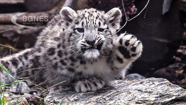 Котка се защити от леопард