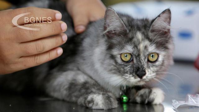 5 признака, че котката не ви обича