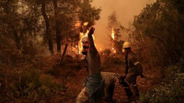 Бедствено положение в щата Калифорния заради горските пожари