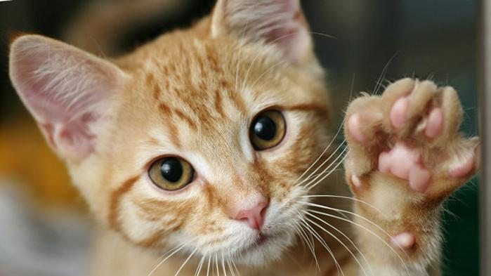 Няколко причини, за да си вземете котка у дома