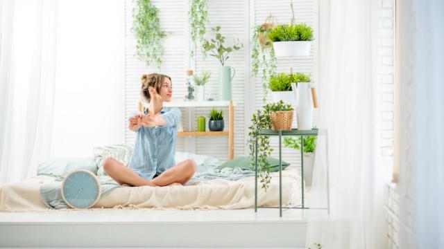 Дали домашните растенията могат да пречистят въздуха вкъщи