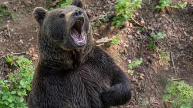 """Упражнение """"Ревяща мечка"""""""