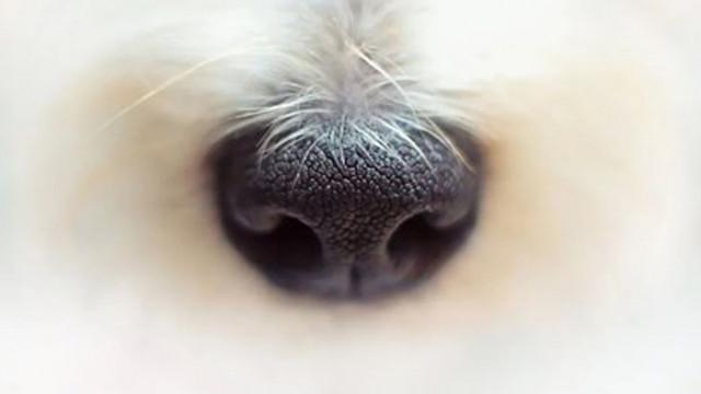 Застреляха куче в Шуменско