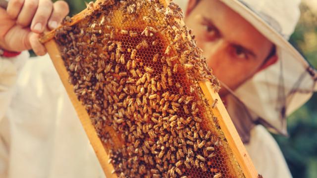 Нацията на пчеларите бие аларма: пчелите правят десет пъти по-малко мед
