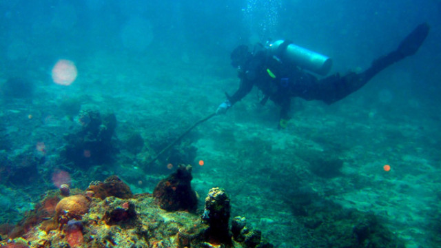 Откриха нови видове месоядни гъби дълбоко в океана