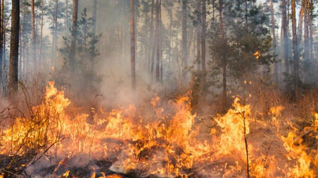 Над 3000 души евакуирани заради пожари в Андалусия