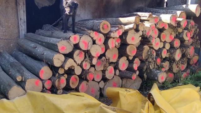Над 200 пр. куб. м. незаконни дърва за огрев са открити в частни домове в еленското село Майско