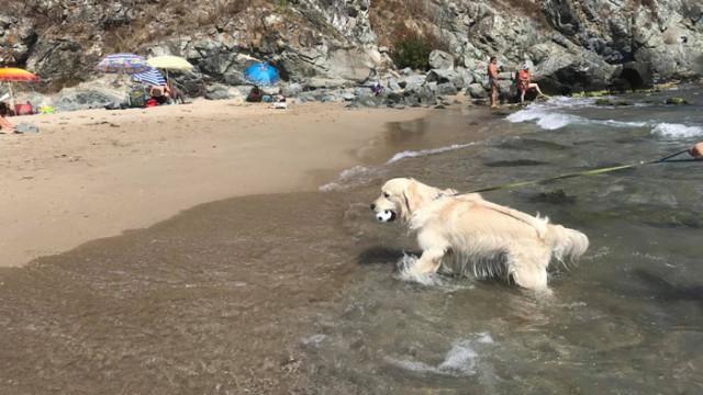 Плаж Силистар отново е пълен с плажуващи, спасител няма