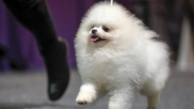 Идеалните породи кучета за града