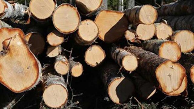 Бракониери отсякоха 130 дървета в Еленския балкан