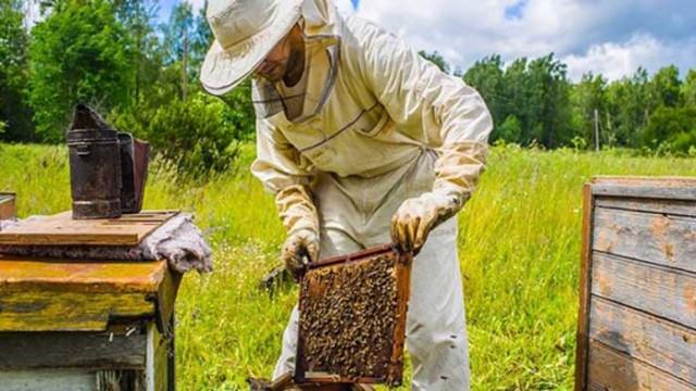 Пчелари се оплакват, че ще останат без финансиране