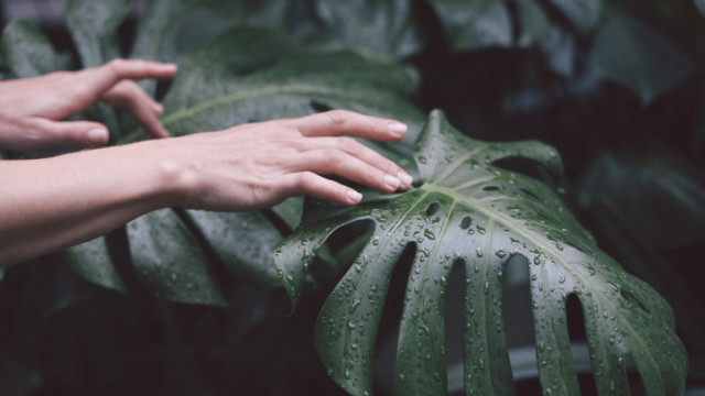 Растенията и защо не бива да ги докосваме