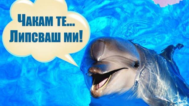 Делфинариумът във Варна отваря врати утре