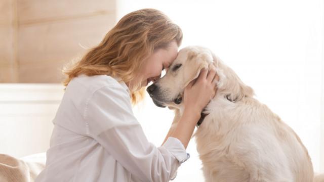 Кучетата, продължителността на живота на стопаните им и как ни помагат да живеем по-дълго