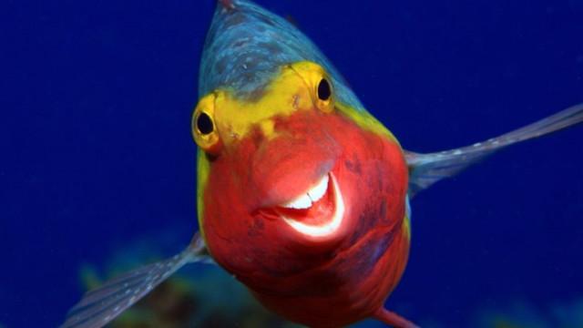 Comedy Wildlife Photography - най-смешните животни на планетата