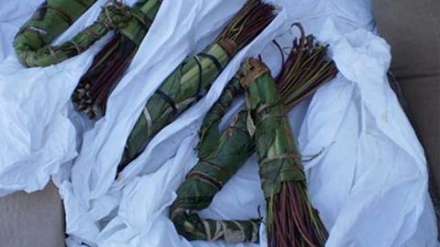 Съдът остави в ареста четири израелки, пренасяли упойващото растение кхат