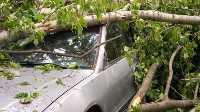 Заради силен вятър дърво падна върху кола в Хасково