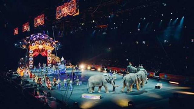 Франция забранява дивите животни в пътуващи циркове