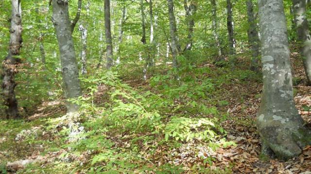 Старите гори на България спечелиха вота на европейските граждани в наградите на Европейската комисия