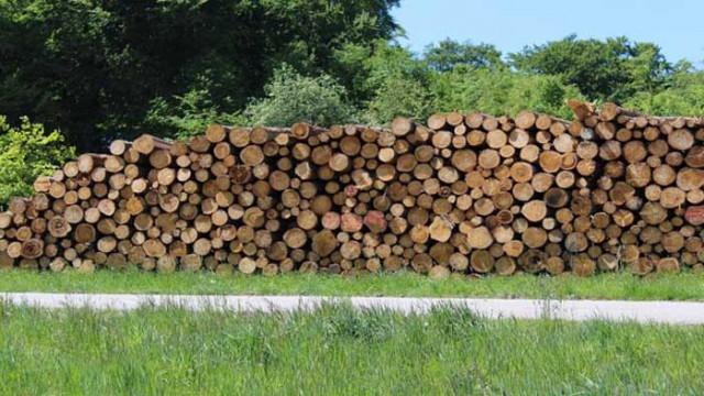 Горските конфискуваха 10 кубика дърва от бракониери