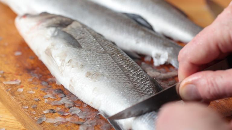 Врачани се натровиха с риба на фестивал в града