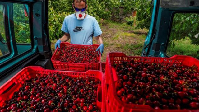 Дори да се включат в селскостопанска работа: безработните запазват социалните си помощи