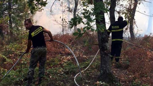 50 000 дка спасени гори в края на пожароопасния сезон