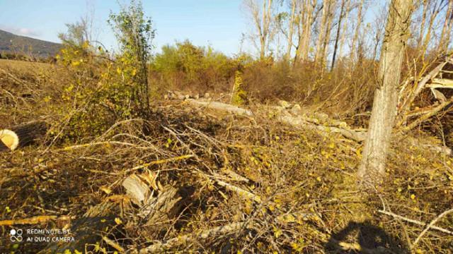 Екип на ИАГ преустанови незаконна сеч в частни гори в землището на с. Сенник, община Севлиево