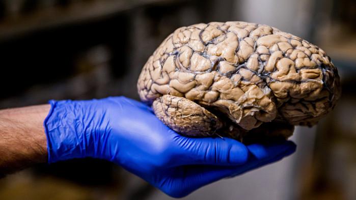 Човешкият мозък и Вселената са устроени по един и същи начин