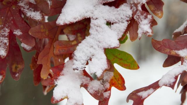 Идва сняг, застудява, жълт код в цялата страна