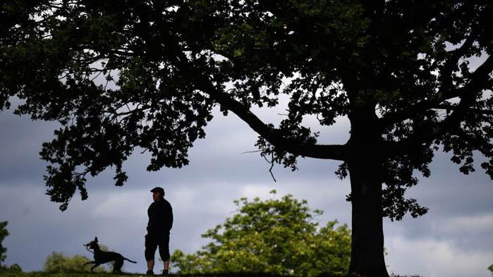 Активисти присаждат плодни клончета на градски дървета, за да има храна за бедните