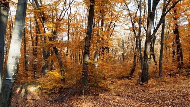 Продължават бракониерските набези в горите