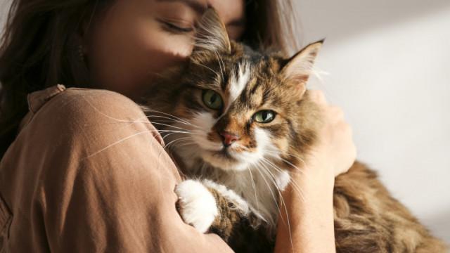 Котките и емоциите им: Какво чувстват, когато печелят или губят