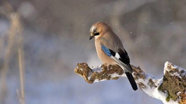 Разнообразието от птици ни действа като повишаване на заплатата