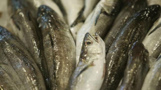 На първо четене: Любителският риболов в Черно море – с риболовен билет