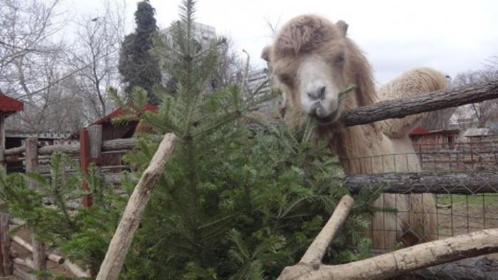 Дарете коледната си елха след празниците, призовават от зоопарка във Варна