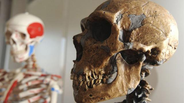 """""""Билд"""": Откритие в България помири неандерталците и хомо сапиенс"""
