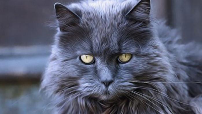 Учени обясняват защо хората страдат от алергия към котки