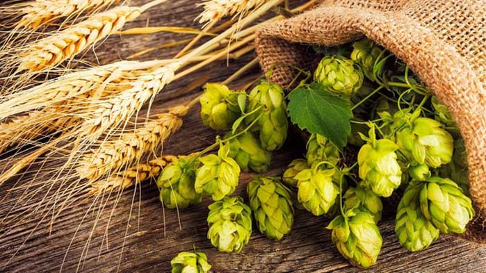 Кризата не спря научните изследвания върху пивото