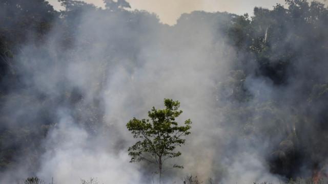 Рекорд на горските пожари за десетилети в Бразилия през 2020 година