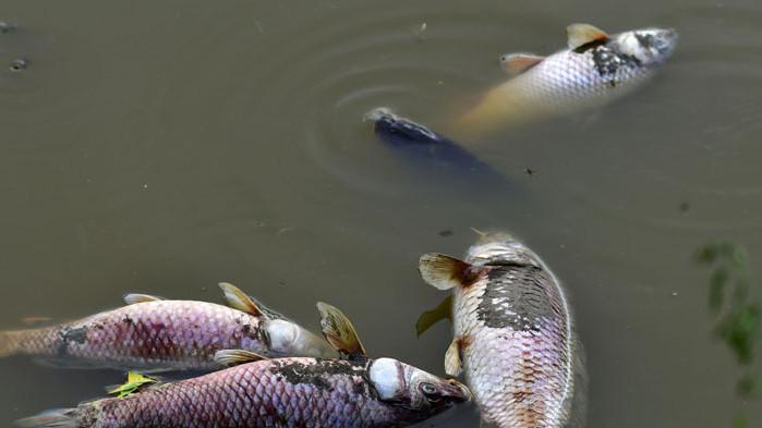Засушаването мори риба във водоеми в Разградско