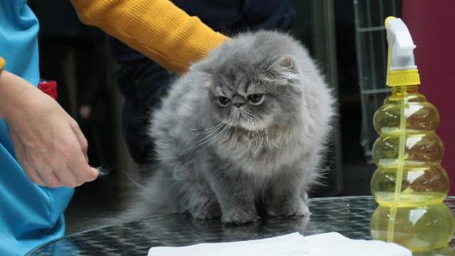Миризми, които влудяват котките