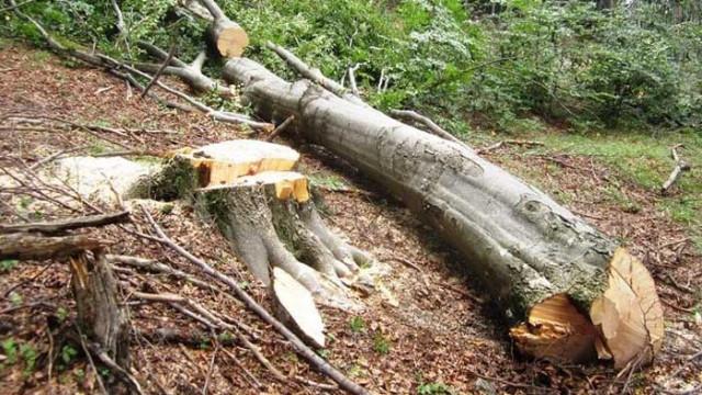Задържаха 10 куб. м. незаконна дървесина в частен имот в с. Мърчево, обл. Монтана